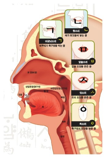 Hangeul Korean alphabet invention from human vocal organ